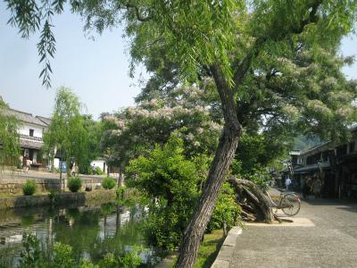120527kurashiki-yanagi.jpg